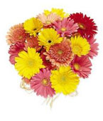 USA Flower USA Florist  USA  Flowers shop USA flower delivery online  ,:Hand Tied Gerbera Daisies - Mixed Colors, w/ greens