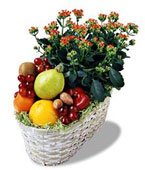 USA Flower USA Florist  USA  Flowers shop USA flower delivery online  ,:The FTD?Fruits & Flowers