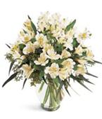 USA Flower USA Florist  USA  Flowers shop USA flower delivery online  ,:The FTD?Winter Elegance