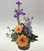 Bolivia Flower Bolivia Florist  Bolivia  Flowers shop Bolivia flower delivery online  Bolivia:Anarrangement for a baby boy.