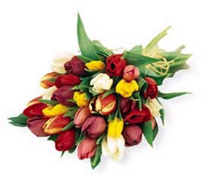 Montreal mother's day Montreal,Québec,:Hand Tied Tulips - Mixed Colors, w/ greens