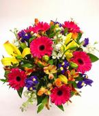 Australia Flower Australia Florist  Australia  Flowers shop Australia flower delivery online  ,:COLOURAMA