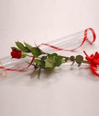 Australia Flower Australia Florist  Australia  Flowers shop Australia flower delivery online  ,:ROSE CYLINDER