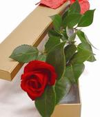 Australia Flower Australia Florist  Australia  Flowers shop Australia flower delivery online  ,:BUD VASE