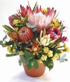 Australia Flower Australia Florist  Australia  Flowers shop Australia flower delivery online  ,:COLOURS OF AUSTRALIA