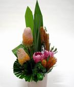 Australia Flower Australia Florist  Australia  Flowers shop Australia flower delivery online  ,:MODERN NATIVES