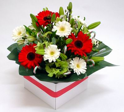 New Zealand Flowers New Zealand flower New Zealand florists :Christmas Delight