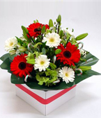 New Zealand Flower New Zealand Florist  New Zealand  Flowers shop New Zealand flower delivery online  :Christmas Delight