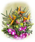 US Orchids US,,:Bird & Orchid Premium Bouquet