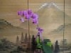 Send flowers online international -LocalStreets- Flower delivery,florists:Phalaenopsis Orchid Plant
