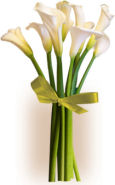 US Lilies US,,:Simply Calla Lilies