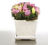 New Zealand Flower New Zealand Florist  New Zealand  Flowers shop New Zealand flower delivery online  :Lilac & Pink SQ Pot