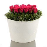New Zealand Flower New Zealand Florist  New Zealand  Flowers shop New Zealand flower delivery online  :Polystone Vase of Hot Pink Roses