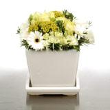 New Zealand Flower New Zealand Florist  New Zealand  Flowers shop New Zealand flower delivery online  :Lemons & Limes SQ Pot