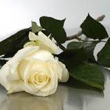 New Zealand Flower New Zealand Florist  New Zealand  Flowers shop New Zealand flower delivery online  :White Long Roses Boxed