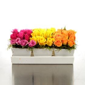 New Zealand Flower New Zealand Florist  New Zealand  Flowers shop New Zealand flower delivery online  :Trio of Bright Roses in Polystone Tray Vase