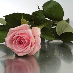 New Zealand Flower New Zealand Florist  New Zealand  Flowers shop New Zealand flower delivery online  :Boxed Sweet Moments Long Pink Roses