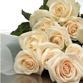 New Zealand Flower New Zealand Florist  New Zealand  Flowers shop New Zealand flower delivery online  :Roses Cream in special Wrap