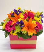 New Zealand Flower New Zealand Florist  New Zealand  Flowers shop New Zealand flower delivery online  :FRESH FUNKY BOX