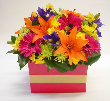 New Zealand Flowers New Zealand flower New Zealand florists :FRESH FUNKY BOX