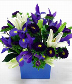 New Zealand Flower New Zealand Florist  New Zealand  Flowers shop New Zealand flower delivery online  :BABY BOY BOX