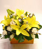 New Zealand Flower New Zealand Florist  New Zealand  Flowers shop New Zealand flower delivery online  :BEAUTIFUL BABY