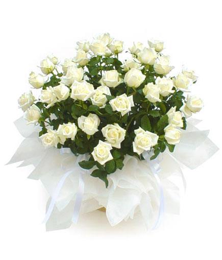 Thailand Flower Thailand Florist  Thailand  Flowers shop Thailand flower delivery online  :BA012