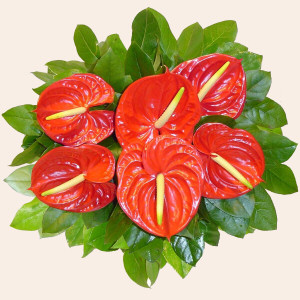 Portugal Flower Portugal Florist  Portugal  Flowers shop Portugal flower delivery online  :Exotic Bouquet (Normal)