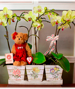 Hong Kong Mother's Day Hong Kong,:Spring Song
