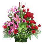 Vietnam Flower Vietnam Florist  Vietnam  Flowers shop Vietnam flower delivery online  :Spring time