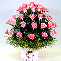 S.Korea Performance/Exhibition S.Korea,,S.Korea:Pink Rose Basket