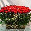 S.Korea Roses S.Korea,,S.Korea:100 roses