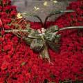 S.Korea Roses S.Korea,,S.Korea:1004 roses