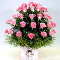 S.Korea Coming-of-Age Day S.Korea,,S.Korea:Pink Rose Basket