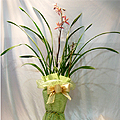 S.Korea Oriental Orchid S.Korea,,S.Korea:Taipei