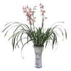 S.Korea Oriental Orchid S.Korea,,S.Korea:Genji