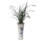 S.Korea Oriental Orchid S.Korea,,S.Korea:Gunlan