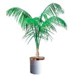 S.Korea Plants S.Korea,,S.Korea:Kencha a palm