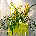 S.Korea Western Orchid S.Korea,,S.Korea:Cymbidium(yellow color)