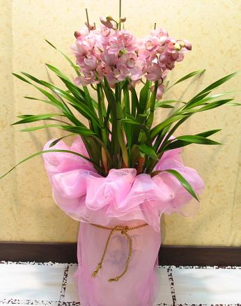 S.Korea Western Orchid S.Korea,,S.Korea:Cymbidium(for winter)