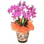 S.Korea Western Orchid S.Korea,,S.Korea:Phalaenopsis(white color)