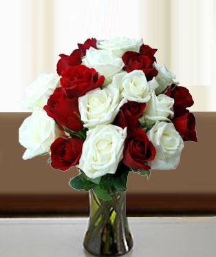Philippines Roses Philippines,:Pure Love