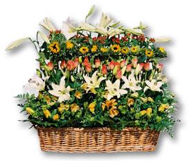 South Africa Flower South Africa Florist  South Africa  Flowers shop South Africa flower delivery online  ,South Africa:Modern Basket