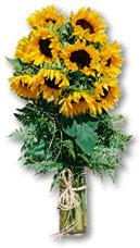 South Africa Flower South Africa Florist  South Africa  Flowers shop South Africa flower delivery online  ,South Africa:Sunflower Vase Arrangement