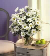 Ukraine Flower Ukraine Florist  Ukraine  Flowers shop Ukraine flower delivery online  :Bouquet of 21 stems of Beautiful White Daisies