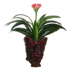 China Congratulation China,,China:Clivia