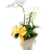 China Gifts for Business China,,China:Butterfly Orchids