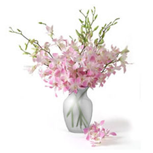 China Flower China Florist  China  Flowers shop China flower delivery online  ,China:Charmer