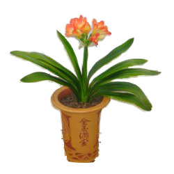 China Thank You China,,China:Clivia