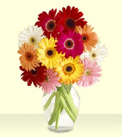 China Flower China Florist  China  Flowers shop China flower delivery online  ,China:Enjoy Life